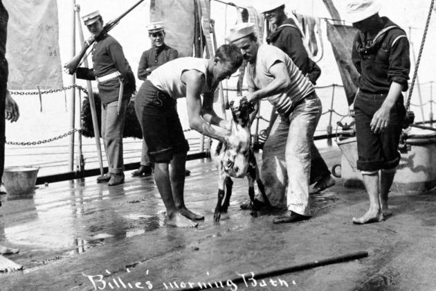 """Billie's Morning Bath."" Sailors wash their goat mascot on board a U.S. Navy battleship, circa 1907-1908. This view may have been taken during the Great White Fleet world cruise."